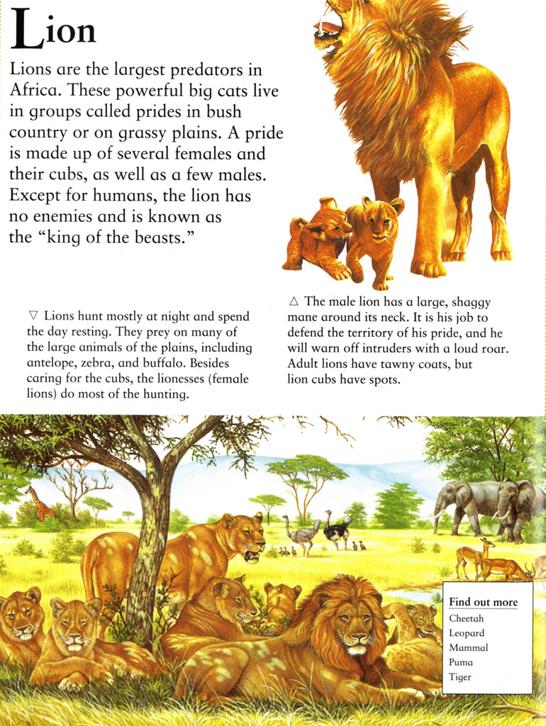 Interior book image for The Little Animal Encyclopedia