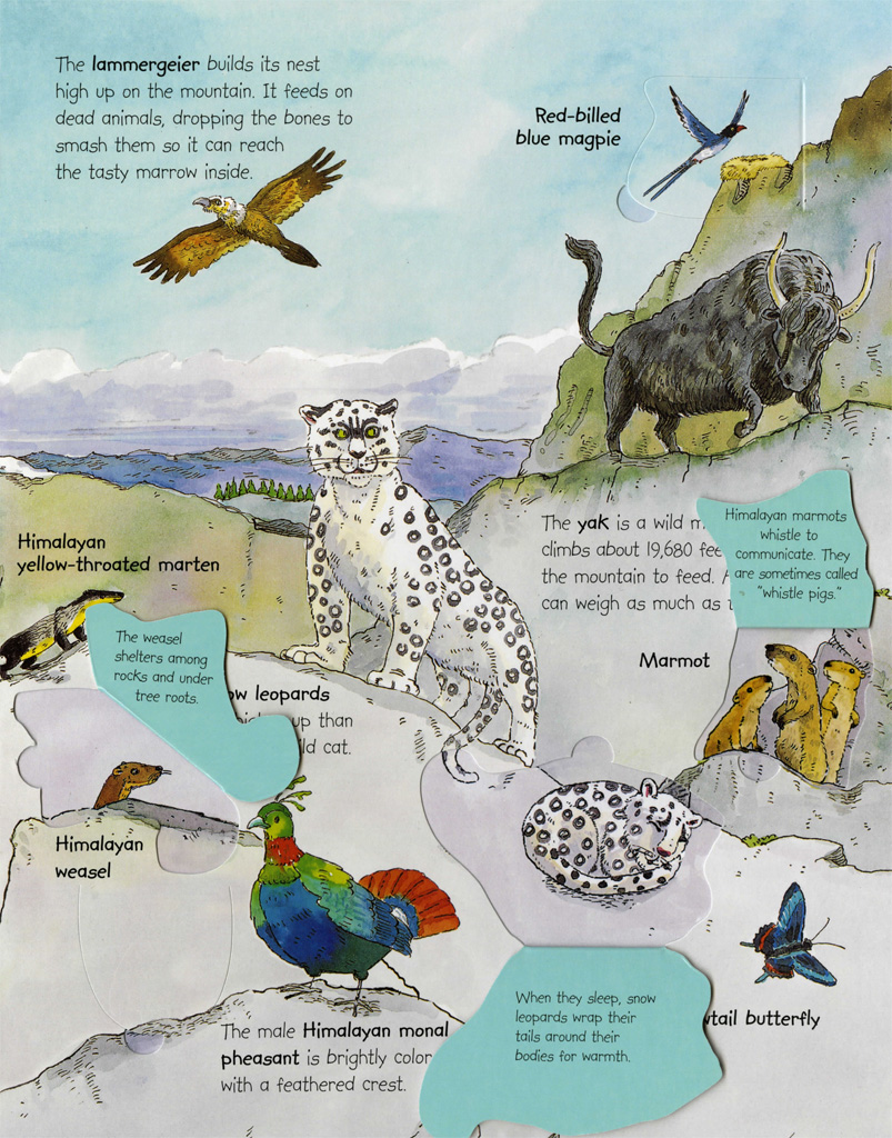 Animals around the world deborah chancellor macmillan with warm and friendly artworks from award winning artist anthony lewis animals around the world contains more than 70 flaps to open gumiabroncs Image collections