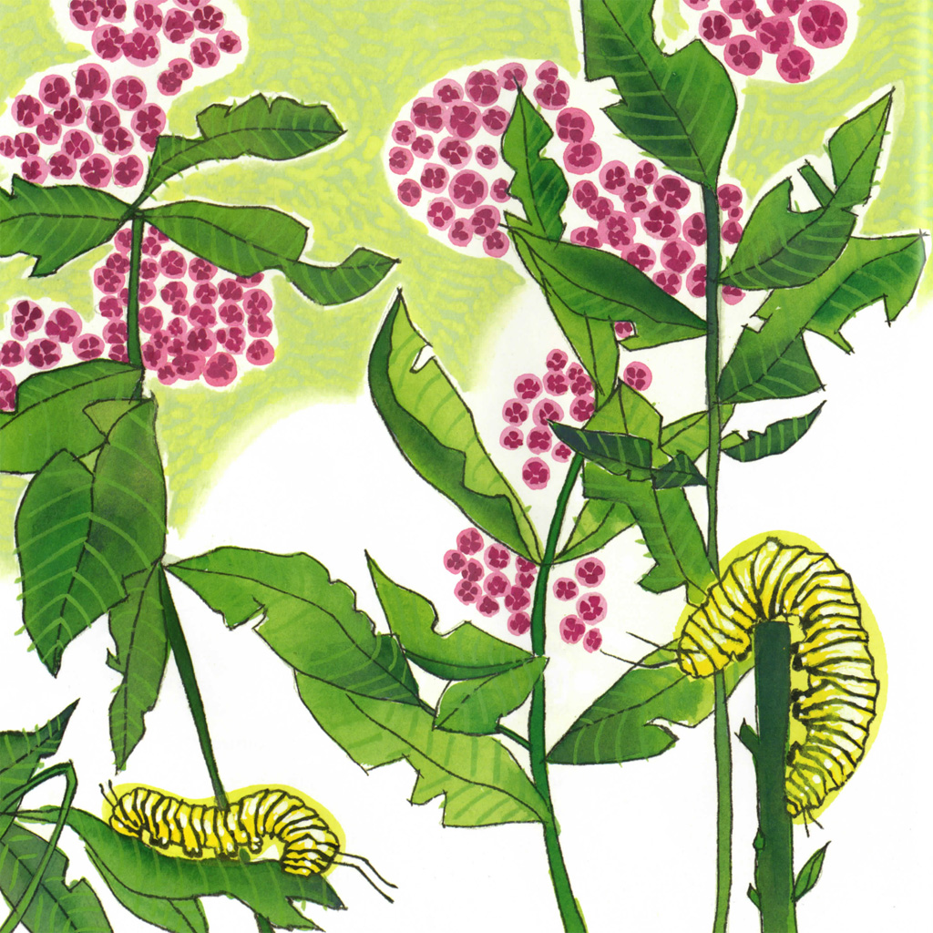 Interior book image for Seeds, Bees, Butterflies, and More!