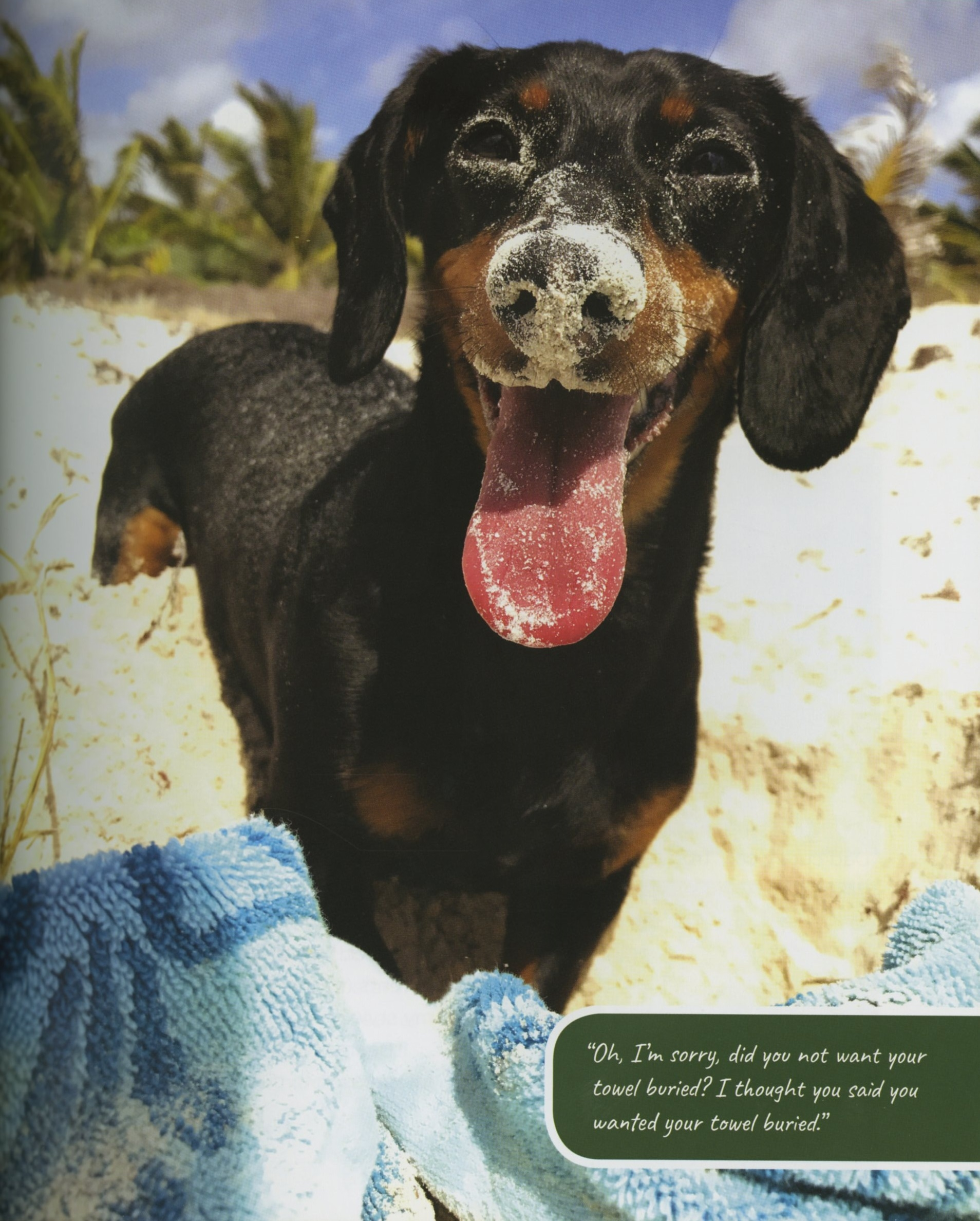 Interior book image for Crusoe, the Worldly Wiener Dog