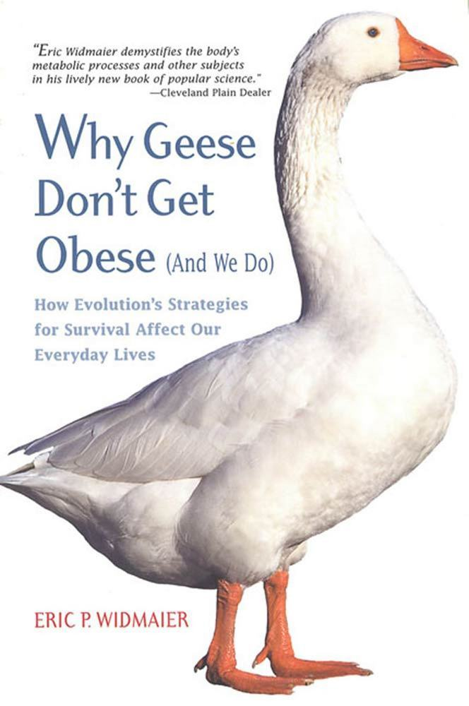Why Geese Don't Get Obese (And We Do)