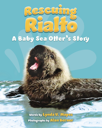 Rescuing Rialto: A Baby Sea Otter's Story